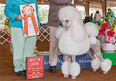 eli wins best in show again