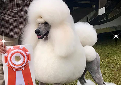 eli wins best in show featured
