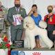 Bonita Wins Best In Show Puppy